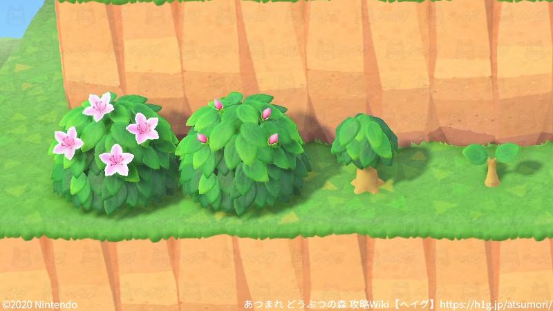 低木開花の流れ.jpg