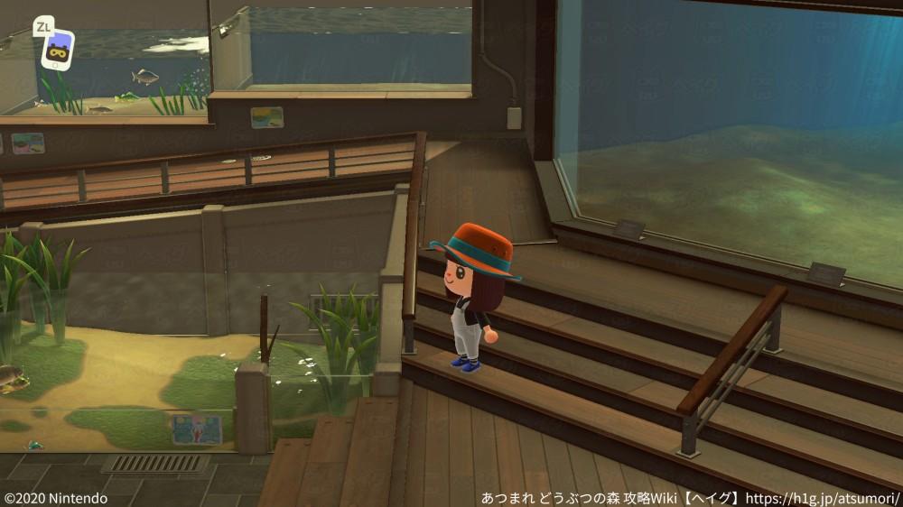 博物館-サカナ3.jpg