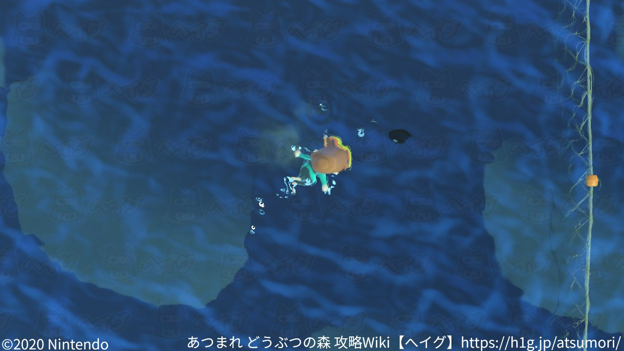 遊泳10.jpg