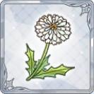 小さな白い花.jpg