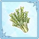 マカロニ菜.jpg