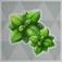 緑の染め草.png