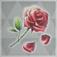 野生の薔薇.png