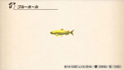 ゴールドシシャモ.jpg