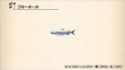 魚図鑑/ブルーホール【ヘイグ攻略まとめWiki】